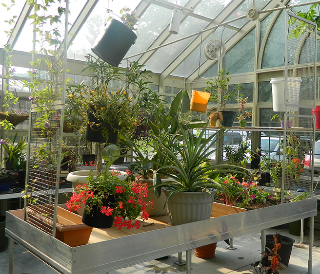Solar Innovations Inc.'s Traditional Greenhouse