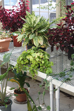 Solar Innovations, Inc. Greenhouse Accessories