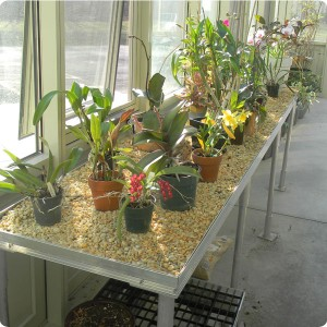 Greenhouse Gravel Bench