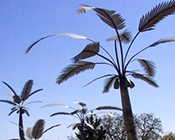 Designer Steel Palm Trees